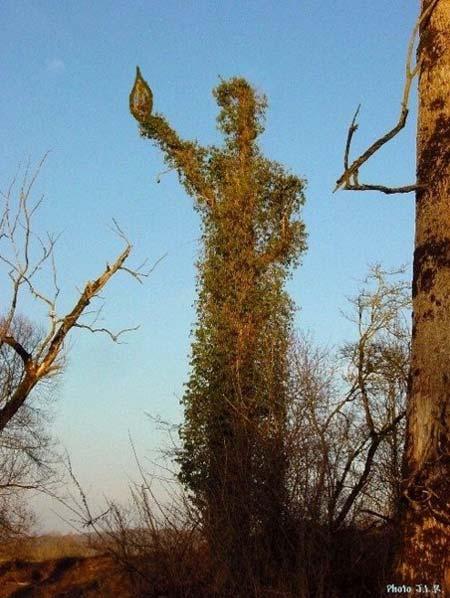 j-C-Romand_la-biodivrersité-éclairant-le-monde-450.jpg