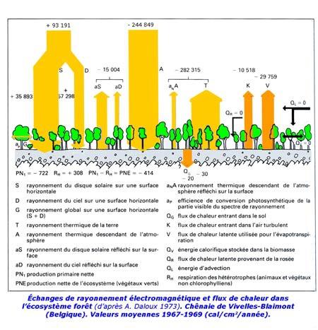 Flux-de-chaleur-dans-l'écosystème-forêt-450.jpg
