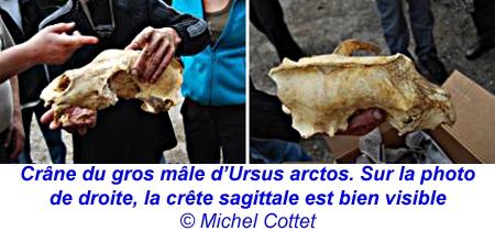 gouffre de la risotte,ours préhistorique,ours brun,spéléologie,paléontologie,jura,doubs,l'hôpital du grosbois