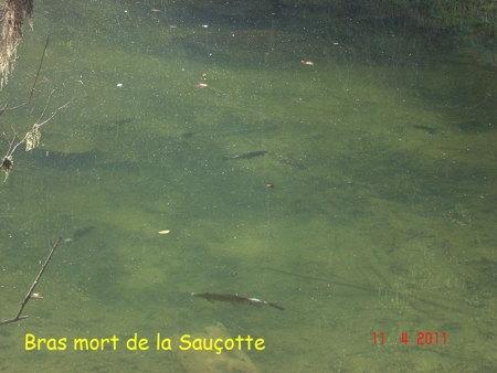 poissons,maladies,pathologie des poissons,doubs,doubs-franco-suisse,montbéliard