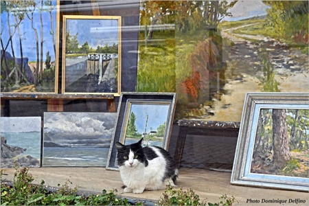 Chat-dans-la-vitrine-450.jpg
