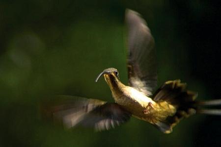 3-oiseau-mouche-1.jpg