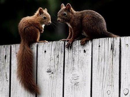 écureuils.jpg