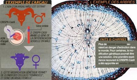 Crisp_049-Exemple-de-l'Arcali-et-des-arbres-450.jpg