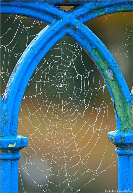 Toile-d'araignée-450.jpg