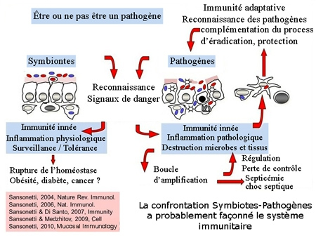 Sansonetti-microbiote-intestinal-450.jpg