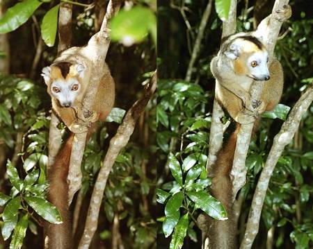 Madagascar_40-1.jpg