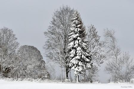 dominique delfino,photographe naturaliste et animalier,hiver,neige et givre,haut-doubs