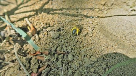 Le-pollen-n'est-pas-en-pelotes-450.jpg