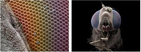 national geographic,jannicke wiik-nielsen,microscopie électronique à balayage