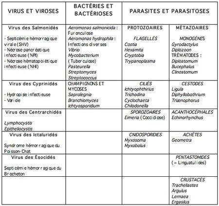 poissons d'eau douce,pathologie des poissons