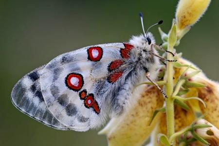 monde sans insectes,loïc chauveau,sciences et avenir