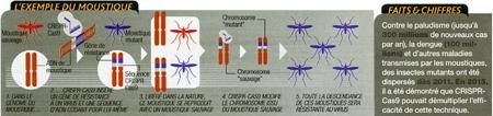 Crisp_045-Exemple-du-paludisme-450.jpg