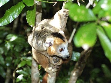 Madagascar_039-1.jpg