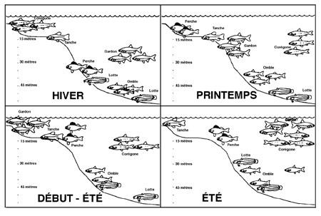 figure2_structure-spatiale-peuplement-450.jpg