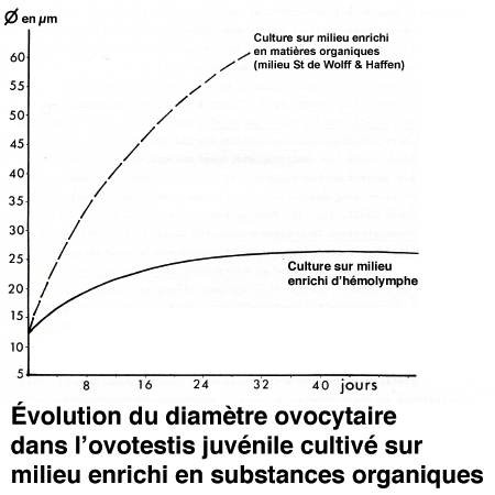 Fig_M_diamètre ovocytaire_culture-1.jpg
