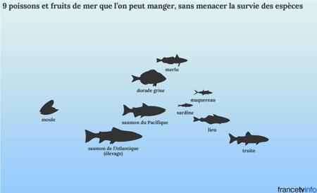 9-poissons-et-fruits-de-mer-que-l'on-peut-manger-sans-menacer-la-survie-des-espèces-450.jpg