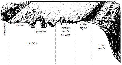 récif-cote-au-vent_01-1.jpg