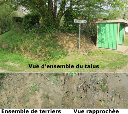 Photo-1-2-3-Talus-450.jpg
