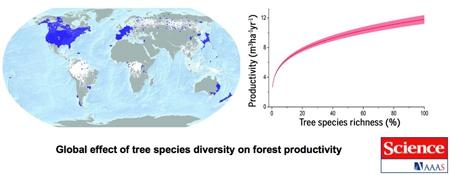 Effet-global-de-la-diversité-des-essences-forestières-sur-la-productivité-forestière-450.jpg