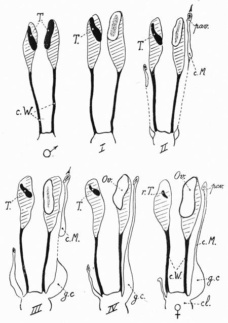 fig-13-450.jpg