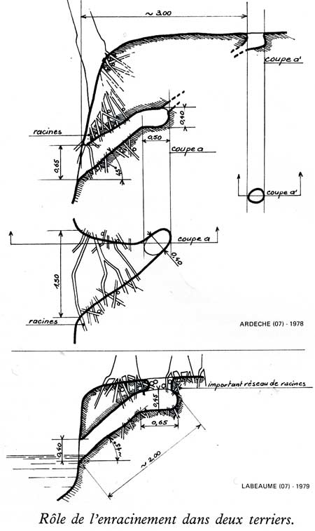 castor fiber,castor canadensis,bièvre,pascal juif