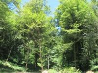 dolines,thise,forêt de chailluz