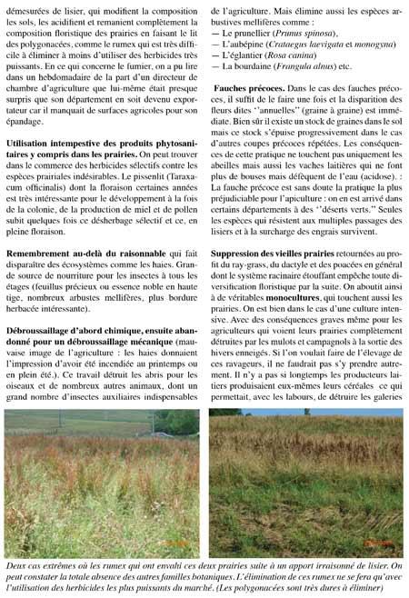 Disparition-des-ressources-nectarifères-et-pollinifères-dans-les-prairies2-450.jpg