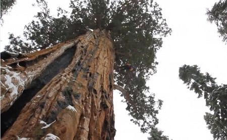 Séquoia-le-Président_02-450.jpg