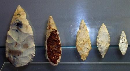feuilles de laurier1.jpg