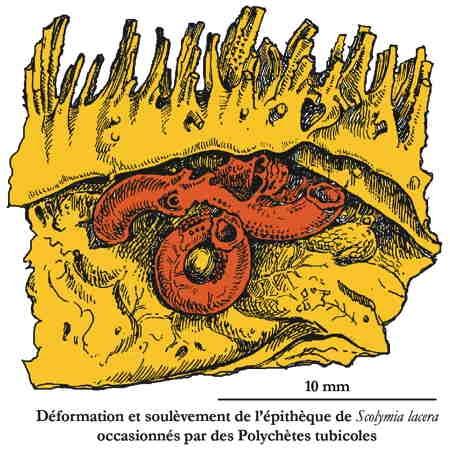 corail-polychète-1.jpg