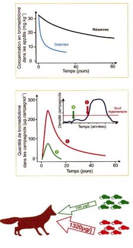 06campagnol-bromadiolone transfert chaînes alimentaires117.jpg
