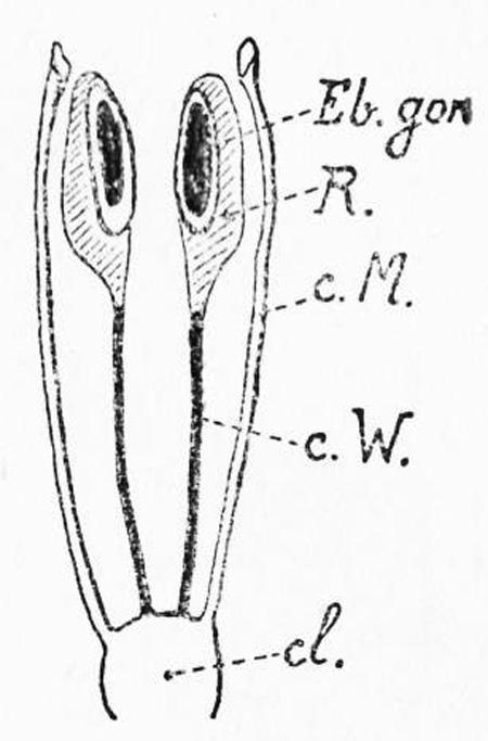 fig-12-450.jpg