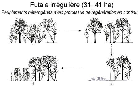 Futaie-irrégulière-450.jpg