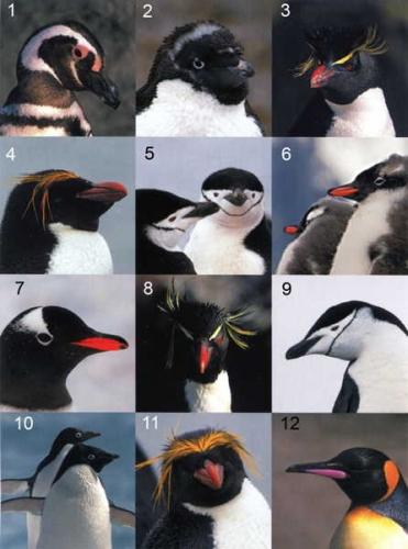 manchots_Patagonie_Antarctique-1.jpg