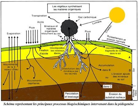 Processus-biochimiques-de-la-pédogenèse-450.jpg