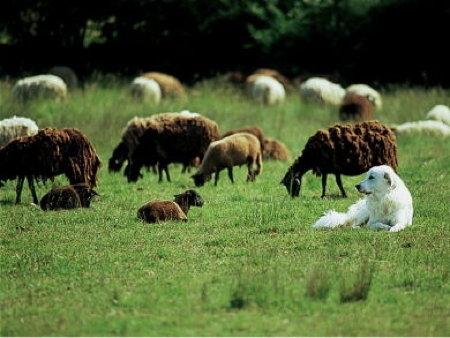 mammifères,jura,franche-comté,prédateurs,chasse,raydelet