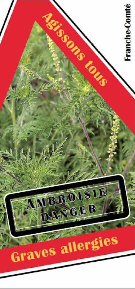 Ambroisie-1-450.jpg