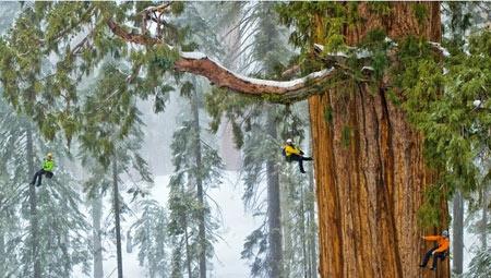 Séquoia-le-Président_01-450.jpg