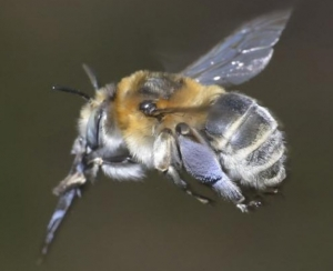 abeilles,journée nationale des abeilles,science