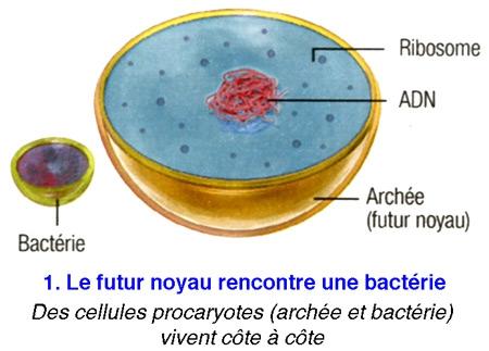 Cellule-eucaryote-1-450.jpg