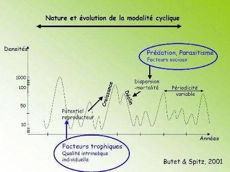 campagnol terrestre modalité cyclique1.jpg