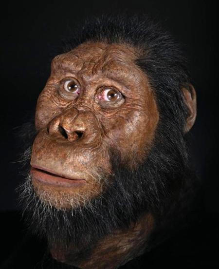 australopithecus anamensis,ancêtre de l'homme,michael greshko,national geographic