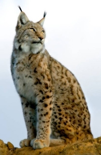 Lynx-Vosges-logo.jpg