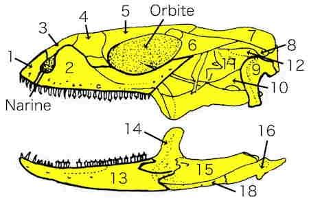 iguane08_crane-1.jpg