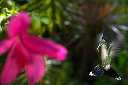 5-colibris-1.jpg