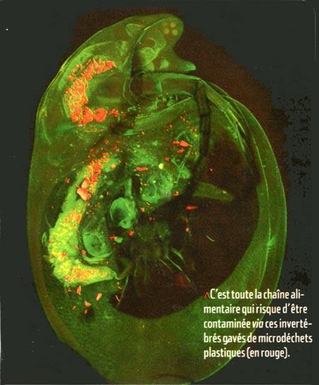 Invertébrés-contamination-plastiques-450.jpg