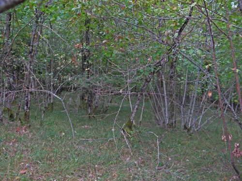 Forêt sèche.jpg