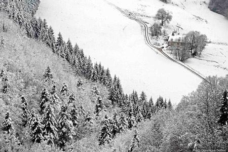 dominique delfino,photographe naturaliste et animalier,côte de maîche,le fondereau,hiver,neige