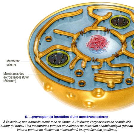 Cellule-eucaryote-5-450.jpg